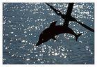 Flipper am Draht