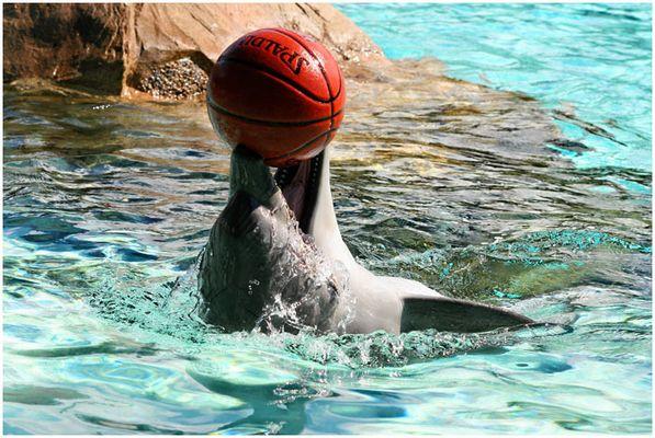 Flipper mit Ball