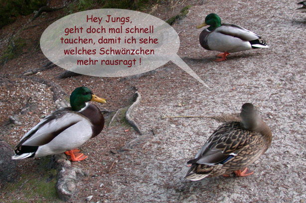 Flirt am Ententeich