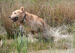 flitze-wasser-shyla