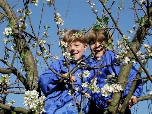 Flo und Basti im Baum
