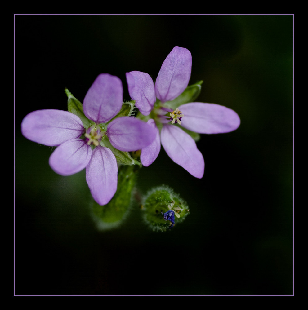 floating lila
