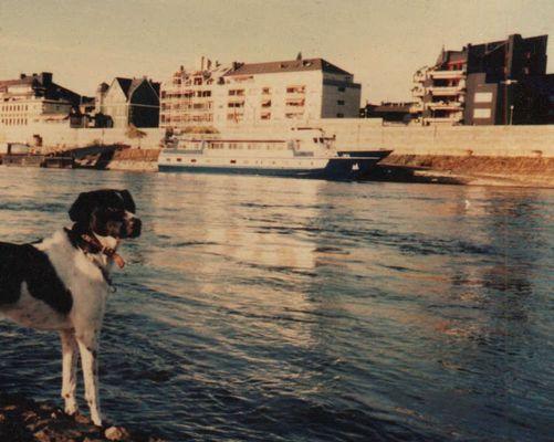 Flocki wacht am Rhein