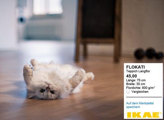 FLOKATI (Bitte Profil lesen, sonst versteht man die Story nicht.)