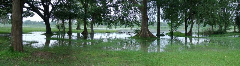 flooded tank in Habarana