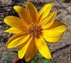Flor Amarilla 1