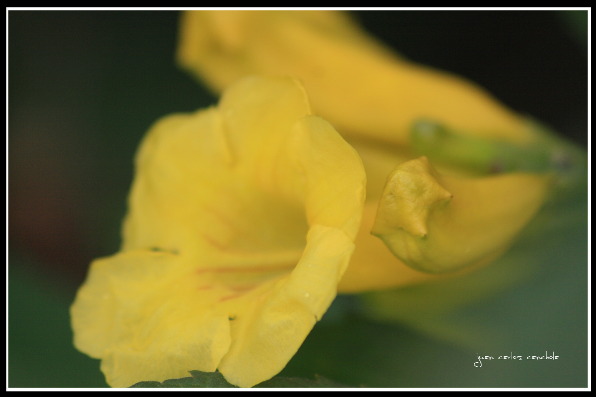 Flor amarilla 3