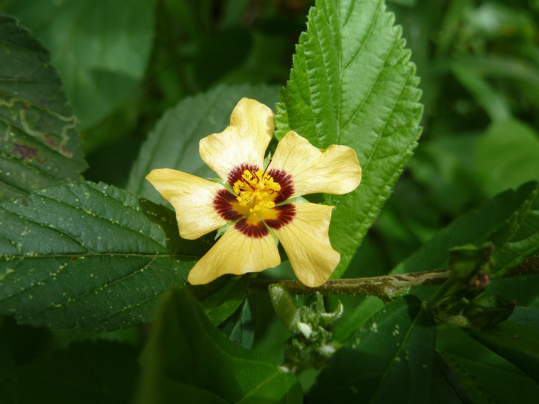 Flor Amazonia ecuatoriana