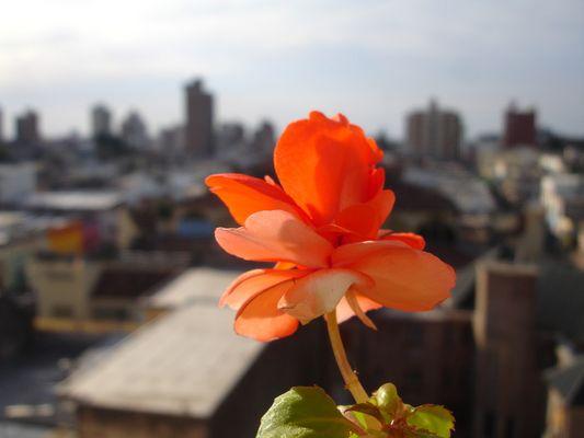 flor civil