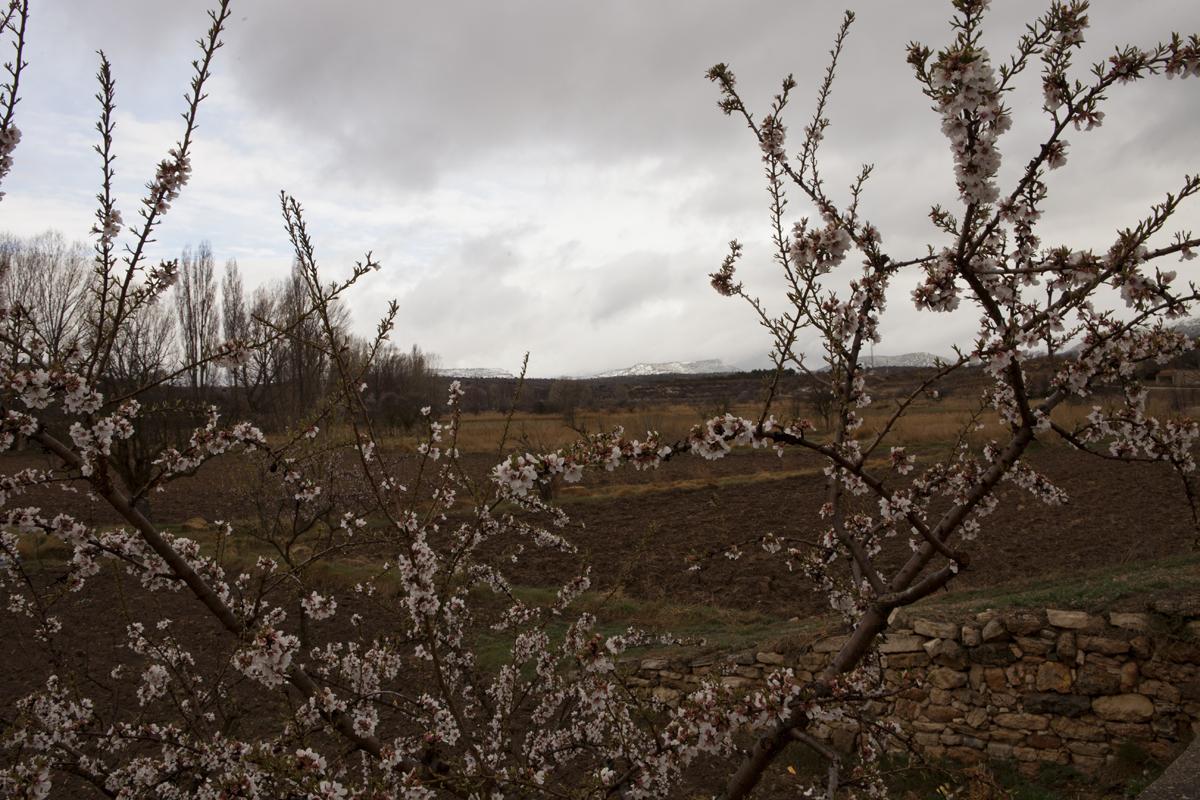 Flor de almendro y nieve
