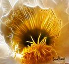 Flor de cactus (5)