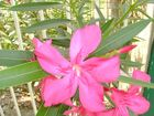 flor de la esperanza