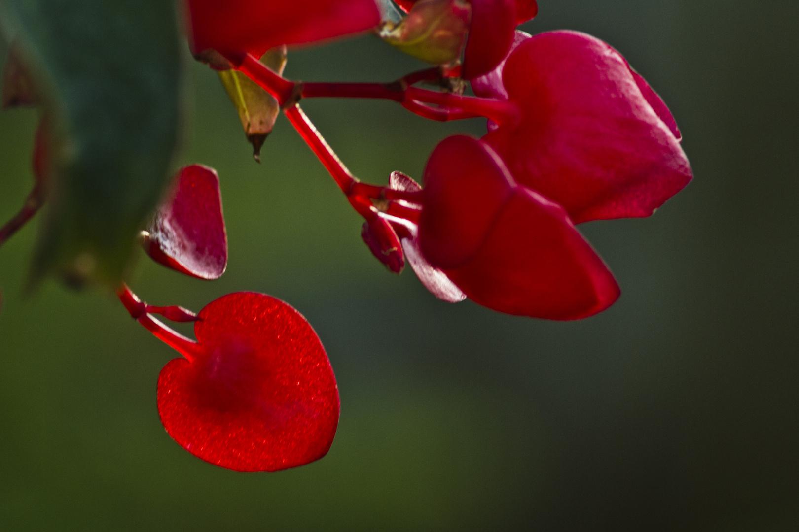 flor de mi jardín