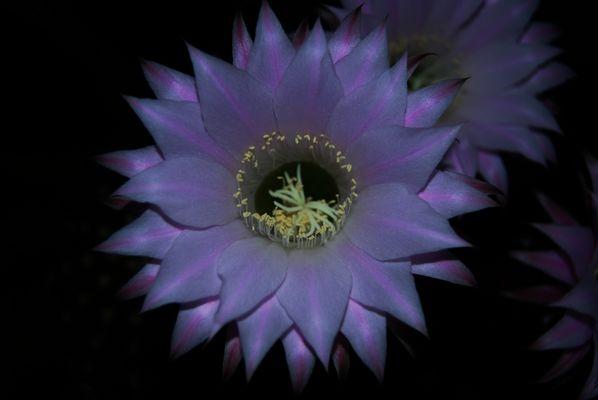 Flor de mo terraza