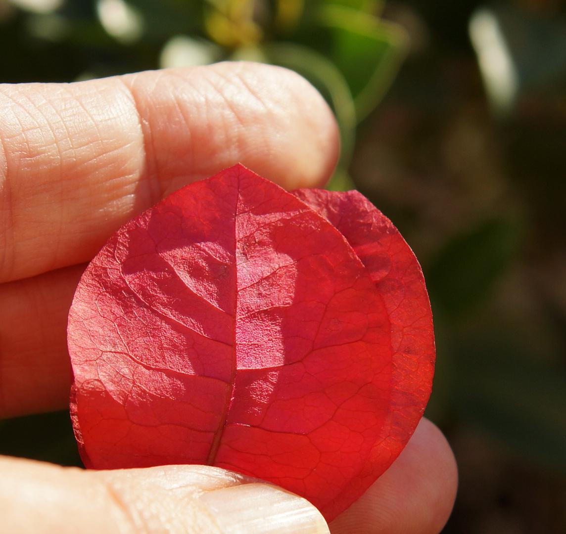 Flor de papel Buganvilla magenta