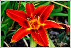 Flor de verano 6