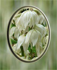 Flor de yukas