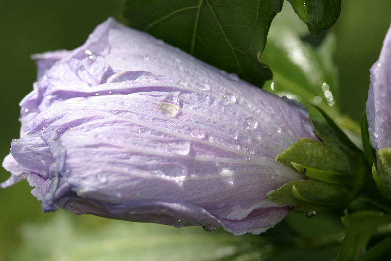 Flor descansando