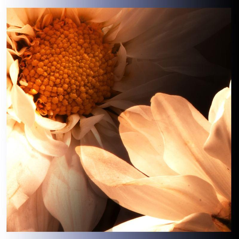 Flor deseada