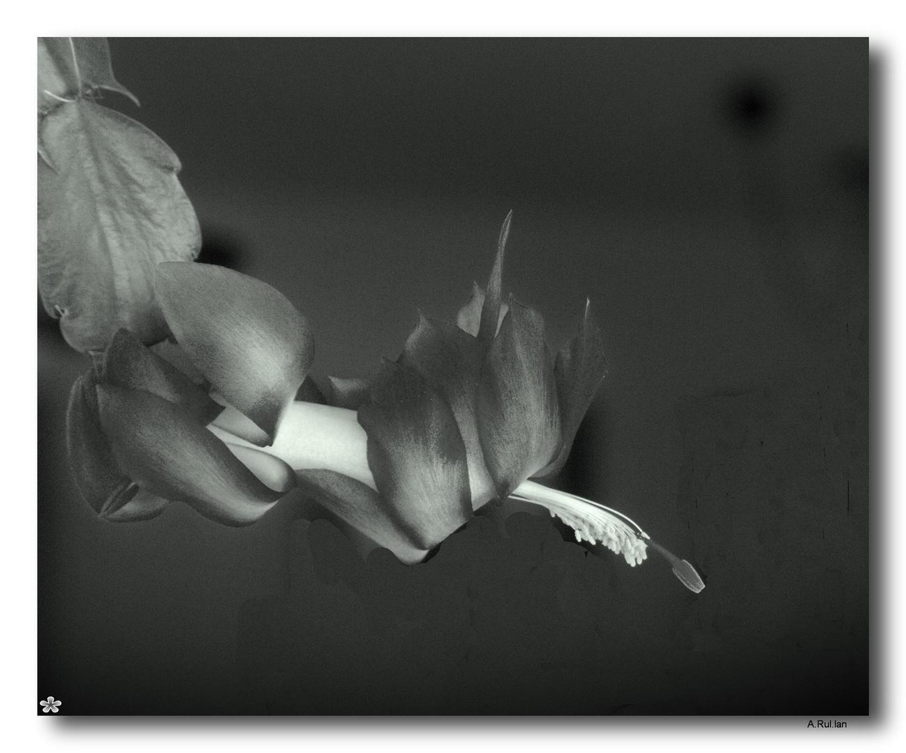 """""""Flor en b/n"""""""