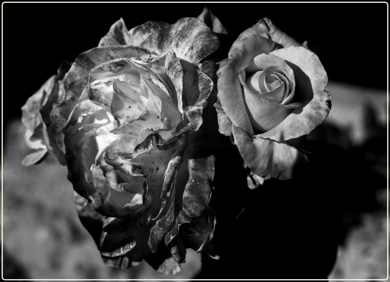 Flor en B/N