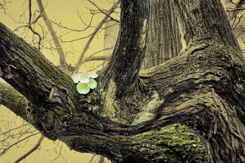 Flor en el árbol