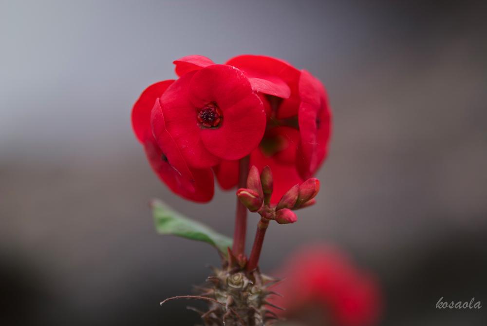 Flor en sequia