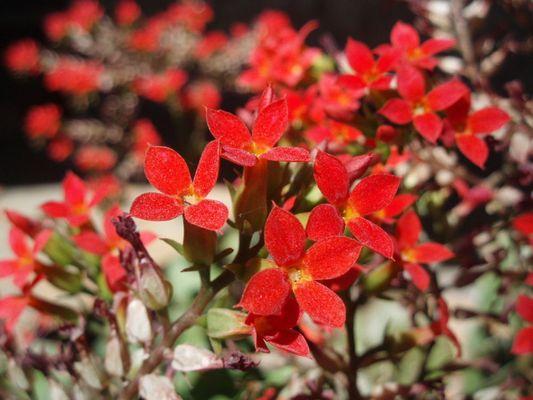 Flor en Tepic