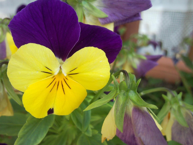Flor en Tuyo