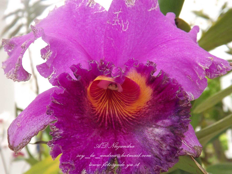 Flor exotica de Brazil 2