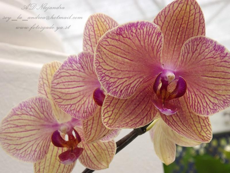 Flor exotica de Brazil