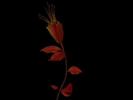 Flor inventada