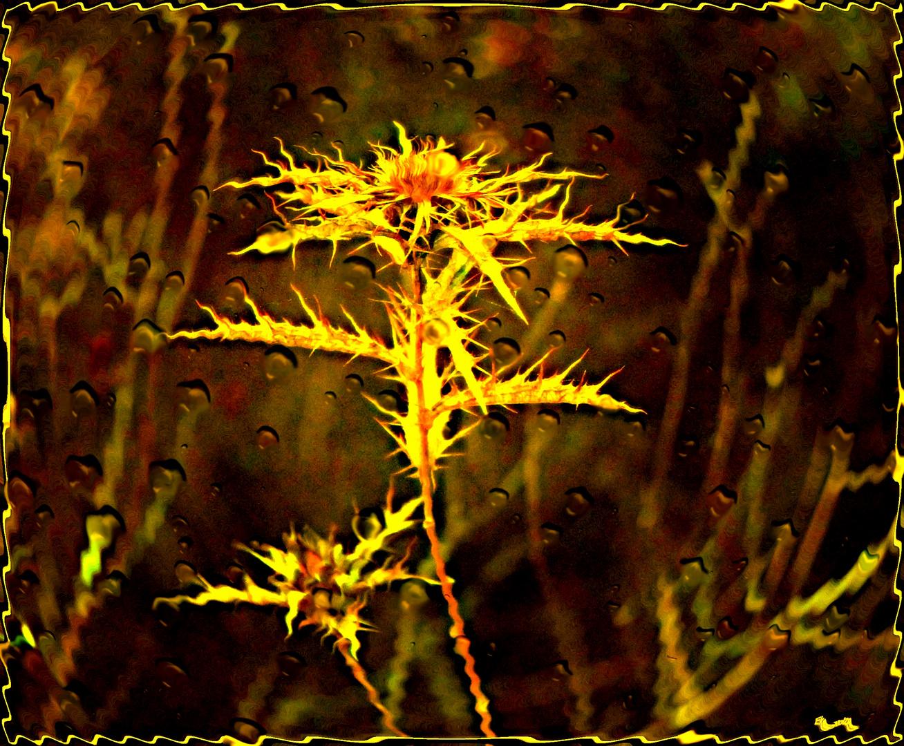 flor seca