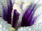 Flor Silvestre I