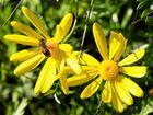 Flor y abeja