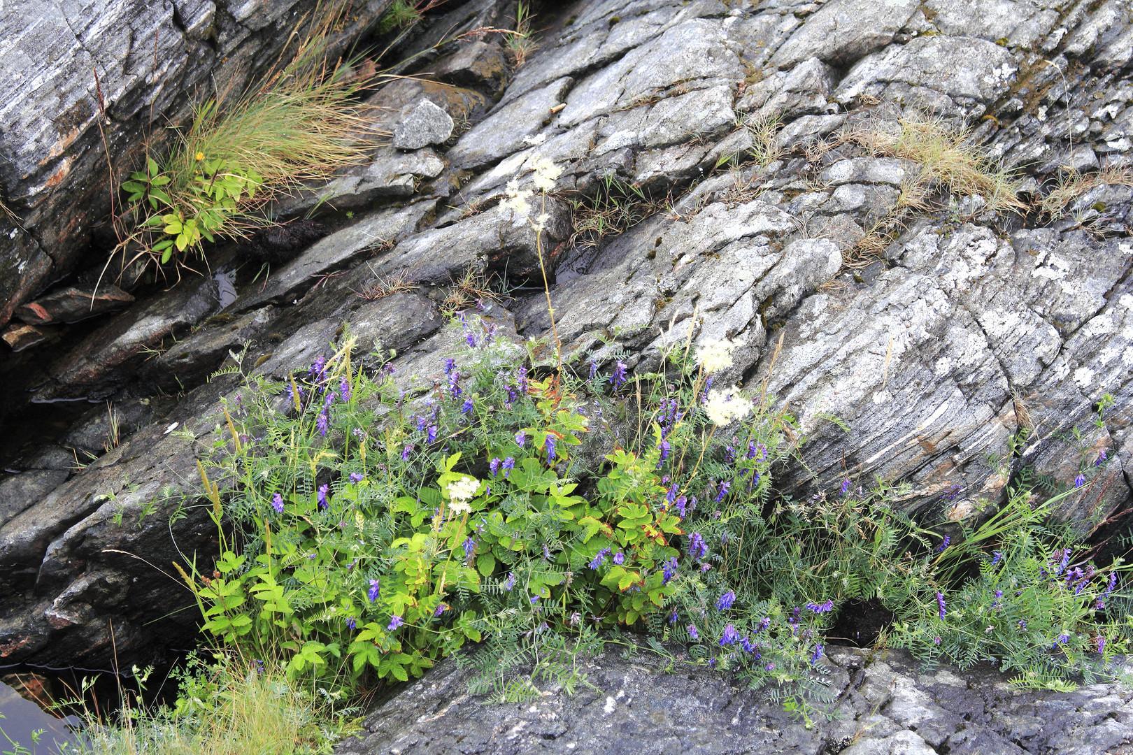 Flora an der Atlantikstraße 1