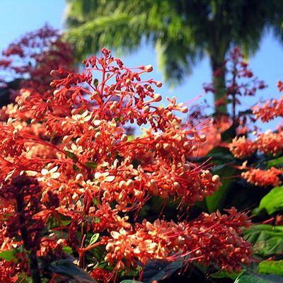 Flora auf Guadeloupe