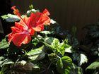 Flora - Giardino dei Lubosch