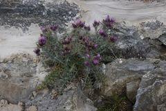 Flora in 2850 m Höhe