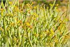 Flora in den Tirasbergen
