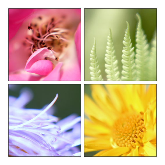 - Flora Quartett -