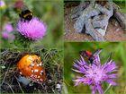 Flora und Fauna, gesehen auf dem Rundweg um den Kopsstausee