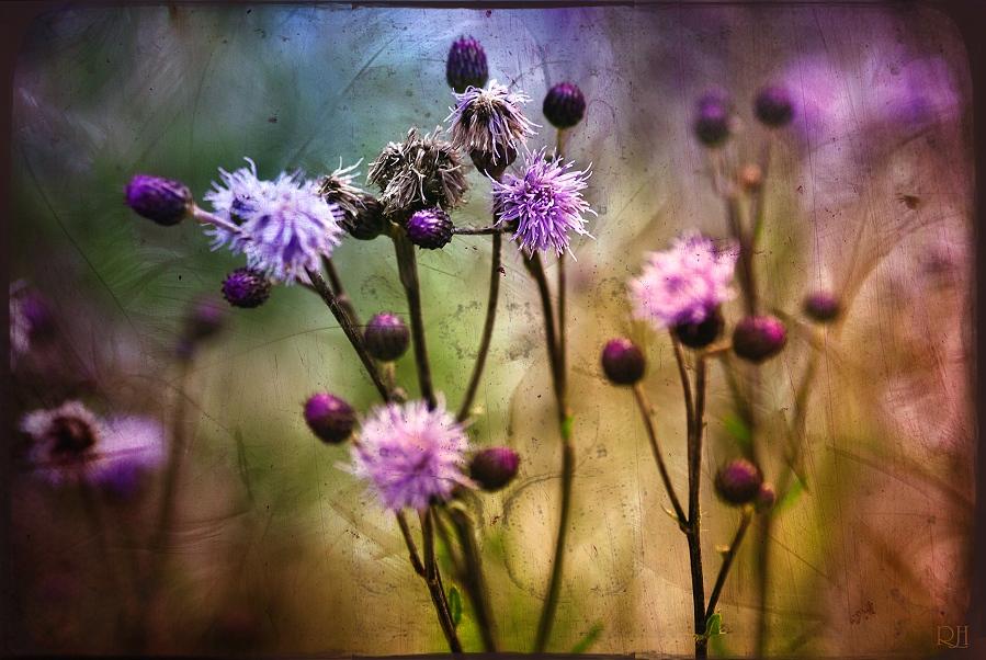 floraisons III