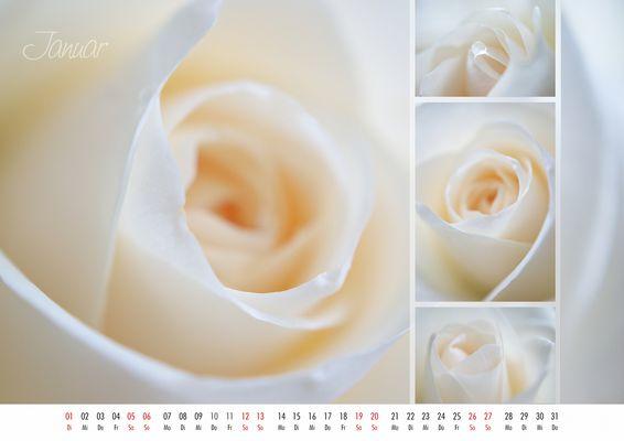 floral colors 2013 - 01