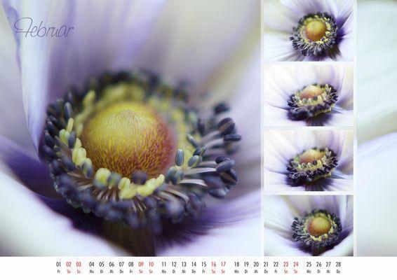 floral colors 2013 - 02