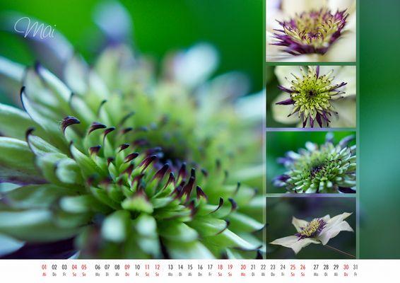 floral colors 2013 - 05