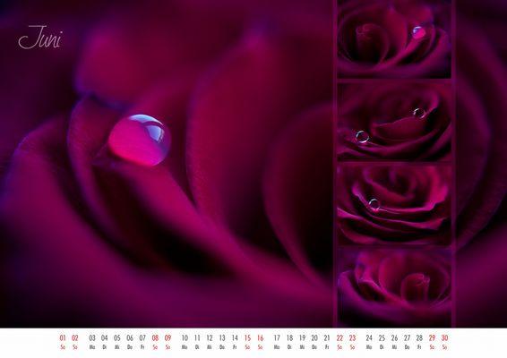 floral colors 2013 - 06