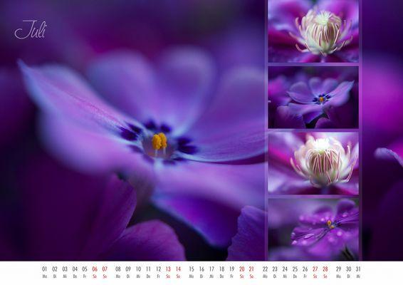 floral colors 2013 - 07