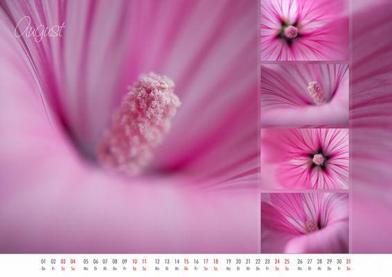 floral colors 2013 - 08