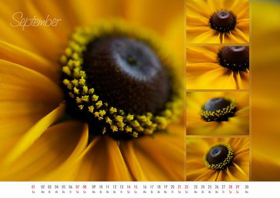 floral colors 2013 - 09